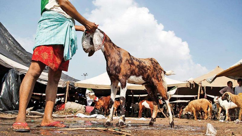 Lahore High Court Bar Association wants Ahmadis barred from sacrificing animals