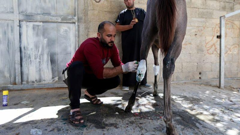 As Gaza truce holds, Palestinians treat wounded animals